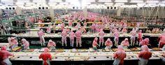 Amerikanske fødevaremedarbejdere går med ble - Erhverv - LIVE