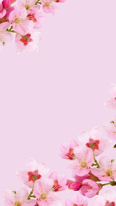 Flowery Wallpaper, Plain Wallpaper, Flower Background Wallpaper, Flower Phone Wallpaper, Pattern Wallpaper, Pretty Backgrounds, Flower Backgrounds, Wallpaper Backgrounds, Phone Screen Wallpaper