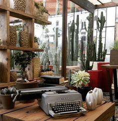 cactus, succulents, giromagi, design, made in italy