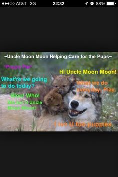 Moon Moon puppy-sits Super Funny Memes, Funny Dog Memes, Funny Pets, Stupid Animals, Cute Funny Animals, Funny Animal Pictures, Moon Moon Memes, Werewolf Name, Husky Humor