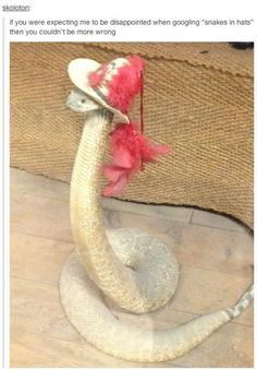 """""""If you were expecting me to be disappointed when googling 'snakes in hats' then you couldn't be more wrong."""""""