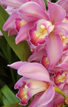 Great Images pink Orchids Ideas Orchid, any bloom with attractiveness as well as magnificence magnificence, features around 700 kinds, above Most Beautiful Flowers, Exotic Flowers, Tropical Flowers, My Flower, Pretty Flowers, Pink Flowers, Flowers Nature, Flowers Garden, Planting Flowers