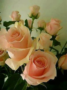 67 Super ideas for flowers roses romantic babies breath Beautiful Rose Flowers, Amazing Flowers, Pink Flowers, Paper Flowers, Beautiful Flowers, Peony Flower, Flower Art, Blossom Garden, Flower Arrangements Simple