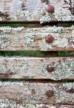 lichen on an old bench