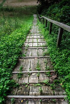 Wooden walkway - Huntington Reservation, Cleveland, Ohio by Bill...
