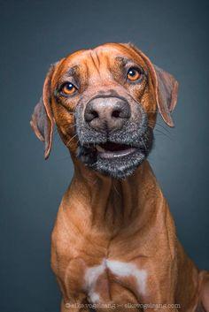 Après la magnifiquesérie Animal SoulsdeRobert Bahou, voici aujourd'hui les portraits animaliers de la photographe allemandeElke Vogelsang, qui capture