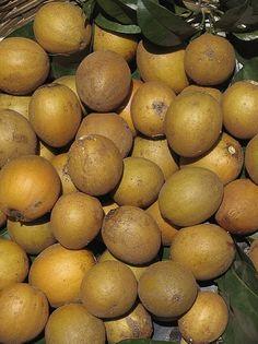 chico philippine fruit - Google Search