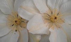 Flowers found somewhere in København