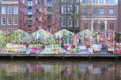 The Amsterdam Bloemen Markt, a floating flower market near the Albert Cuyp Market. The Cuyp Market has been a cultural destination to shop for bargains. One can find everything from famous Dutch cheeses, flowers, beads, clothes to antiques.  Always go to the Cuyp market  when in Amsterdam.