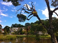 Lost lake and bromelia - Gramado RS Brasil Golf Courses, City, Brazil, Cities