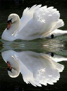 Hermosa reflesion