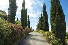 Azienda Agricola Casa di Monte, #Laudemio producer in Montespertoli, Florence, #Tuscany