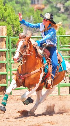 Equine American Paint Horse western quarter paint horse paint pinto horse Gypsy Vanner Indian pony solid tovero overo frame sabino