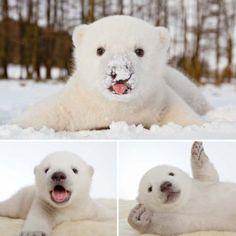 Baby polar bear Siku's first snow. Happy Friday.