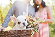 I love that they included their french bulldog puppy in their engagement session ♡ Pet Photography ♡ Dogs