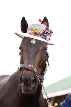 The Kentucky Derby is known for two things .... horses and hats!
