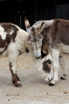 Donkey Sanctuary June 2015 43 | von eye hart