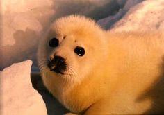 So cute! Those eyes are like puppy dog eyes.