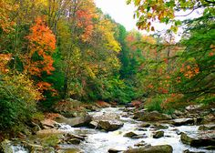 Autumn Trees River Blue Ridge Parkway Matted 5 by Celticcatphotos, $18.00