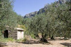 Buis-les-Baronnies, Drôme, France. Visitez la charmante petite ville réputée pour ses champs d'oliviers, ses tilleuls et sa douceur de vivre.