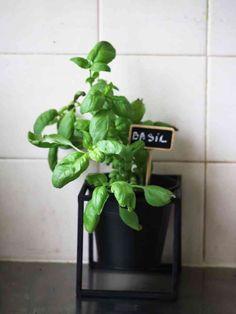 choisir le bon pot pour cultiver un potager sur balcon choppe v g tale choisir le bon. Black Bedroom Furniture Sets. Home Design Ideas