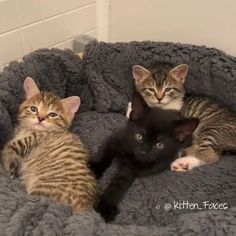 Cute Wild Animals, Happy Animals, Cute Funny Animals, Funny Cats, Animals Beautiful, Cute Baby Cats, Kittens Cutest, Cute Babies, Kittens And Puppies