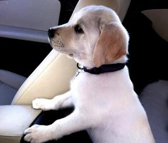 beautiful dogs - Αναζήτηση Google