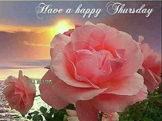 I hope you all have a beautiful Thursday ...:)