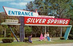 Silver Springs, Florida   Flickr - Photo Sharing!