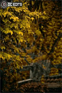 Yellowish Cb background HD new