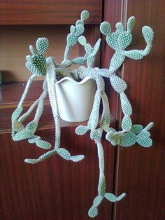 Cactus - Opuntia that is hanging.