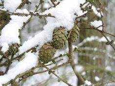 Scenariusze zajęć edukacji przyrodniczej ze stronyLasu Rysia eRysia (Lasów Państwowych).   http://nauczyciele.erys.pl/
