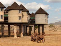 8 Hotels Where Wild Animals Roam Free - Photos