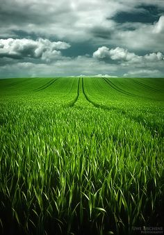 simplicity~beautiful farm fields~