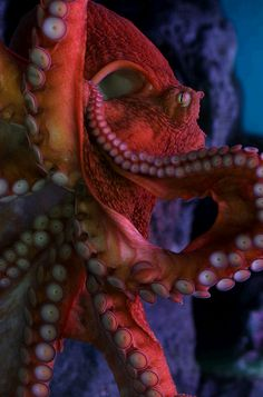 Tell me, O Octopus, I begs, Is those things arms, or is they legs? I marvel at thee, Octopus; If I were thou, I'd call me Us! ~Ogden N...