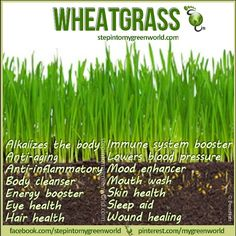 Juicing wheatgrass can lower blood pressure.