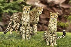 three amigas | Flickr - Photo Sharing!