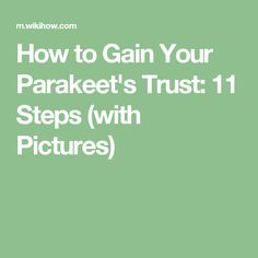 How to Gain Your Parakeet's Trust: 11 Steps (with Pictures)