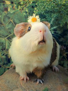 Her guinea pig, happy.