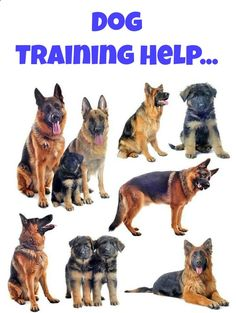 """Discover the latest """"hands off"""" potty training secrets as well as other helpful training tips for your dog. Click here to read more>> www.dog-names-and..."""