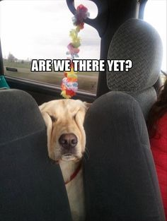 The question all parents dread...and all pet owners too <3 <3 <3