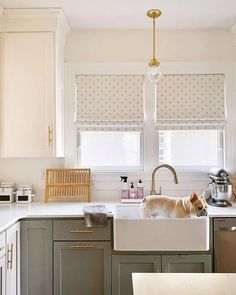 Green Cabinets, Green Kitchen, Farrow Ball, Kitchen Paint, Types Of Wood, Accent Colors, Dog Pictures, Modern Farmhouse, Pigeon House