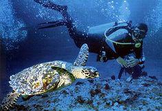 imagenes de turismo ecologico - AOL Image Search Results