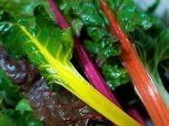 フレッシュグループ淡路島 - 香りと彩りの島からハーブと野菜を届けます