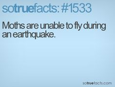 Moths are unable to fly during an earthquake.