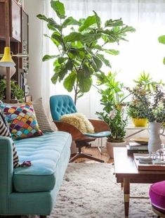 colorful couch and chair in eclectic living room. fiddle leaf fig and houseplants. pillows.