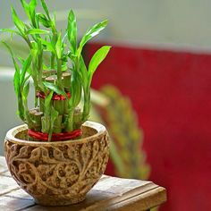 10 bellas imágenes de arreglos de bambú de la buena suerte   LoveToKnow Consejos Feng Shui, Thanksgiving Decorations, A Table, Bamboo, Planter Pots, Interior, Koi, Gardens, Good Luck