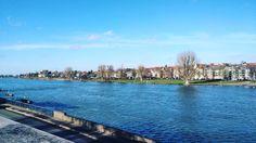 Once summer comes the Neckarwiese will be very popular #heidelberg #heimathd #heimatheidelberg #river #neckar #nature #city #heidelpics #heimat #homesweethome #ig_nature #natur #stadt #neckarwiese #fluss #bluesky #instasky #skylovers #cloudporn #skyporn #blau #baum #trees #naturephotography #idyllic #idyllisch #goodlife #instagood #instamood #clarendon by dojays