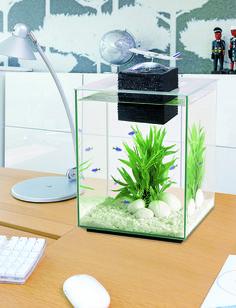 décoration aquarium truffaut