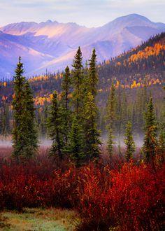 Autumn in the Brooks Range (Alaska) by Carol Gering